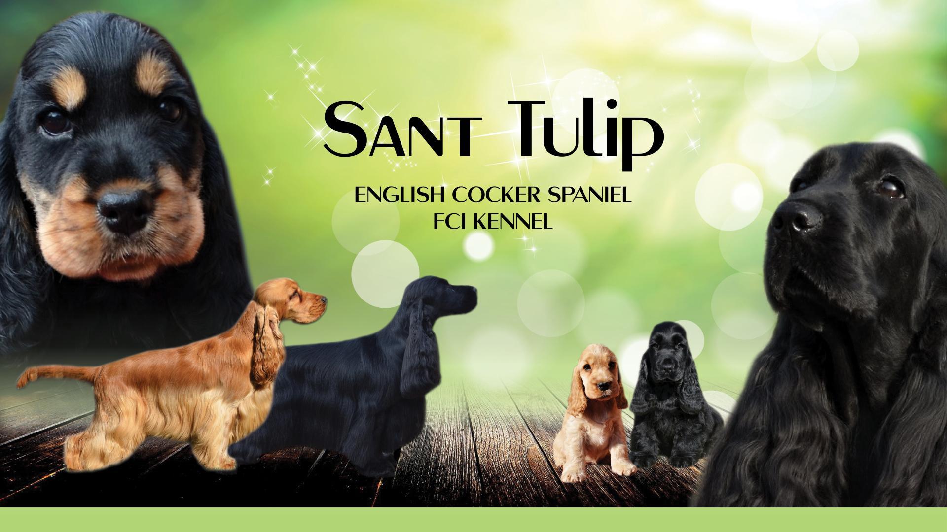Ch.s. Sant Tulip